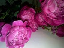 Time för en vas! :) Arkivbild