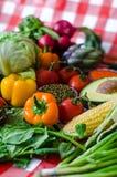 Time för sommargrönsaker! royaltyfria foton