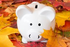 Time for Fall Savings Royalty Free Stock Images