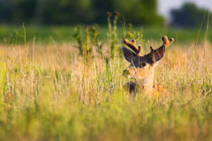 Free Time For A Rest Stock Image - 97452141