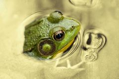 Time for frog Stock Photos