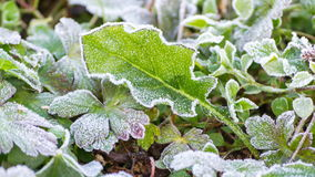 Time frost on leaf melting stock footage