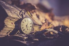 Time goes by: vintage watch outdoors; wood and leaves. Vintage watch leans on a wood piece and dry leaves, blurriness time goes clock duration speed up period stock photo
