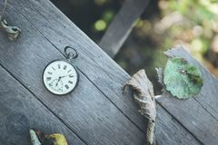 Time goes by: vintage watch outdoors; wood and leaves. Vintage pocket watch on a wood board, colourful leaves, autumn time goes clock duration speed up period stock photo