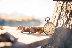 Time goes by: vintage watch outdoors; wood and leaves. Vintage pocket watch on a wood board, colourful leaves, autumn, sunshine time goes clock duration speed up stock images