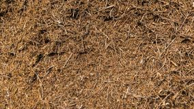 Time Lapse Anthill stock video footage