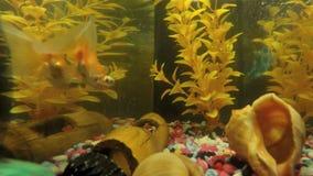 Time Lapse of Aquarium Fish Tank.  stock video