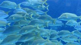 Time Lapse of Aquarium Fish Tank stock video footage