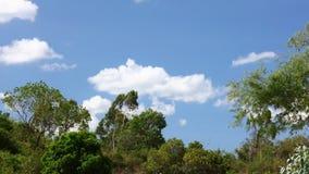Time Lapse Asie de cieux tropicaux et de cimes d'arbre de jungle clips vidéos
