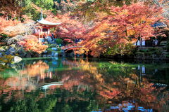 Time lapse of autumn season,The leave change color of red in Temple japan stock video footage