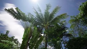 Time lapse in beautiful tropical garden. Of trees over moving clouds sky background during summer day stock video