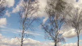 Time-lapse. Birches swing in the wind against the background of the sky with clouds in the spring stock video footage