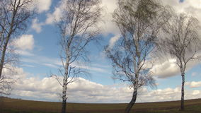 Time-lapse. Birches swing in the wind against the background of the sky with clouds in the spring stock video
