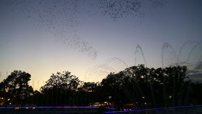 Time lapse, Birds,sky, dance,show 2016 stock video footage
