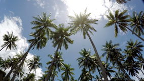 Time lapse . The bottom view on palm trees against the background of blue solar the sky with moving white clouds. The bottom view on palm trees against the stock footage
