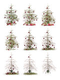 Time lapse - Christmas tree. Isolated on a white background Stock Image