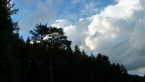 Time lapse clip of white fluffy clouds over blue sky (in a forest) stock video
