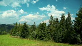 Time lapse of clouds and beautiful green coniferous trees stock video