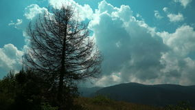 Time lapse of clouds and dead tree in mountains. Video without birds and defects stock video