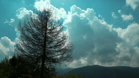Time lapse of clouds and dead tree in mountains. Video without birds and defects stock video footage