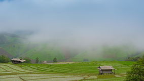 Time lapse clouds and mist float on rice farm of thailand Stock Photo