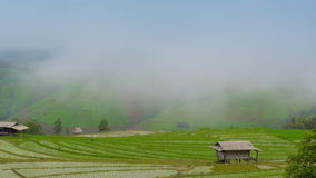 Time lapse clouds and mist float on rice farm of thailand Royalty Free Stock Image