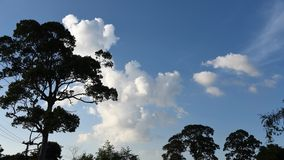 Time lapse of clouds movement in blue sky with tree foreground stock footage