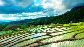 Time lapse, Clouds moving over the rice fields reflected in the water stock video
