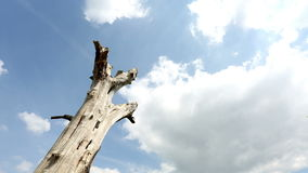 Time lapse of clouds rolling above a dead tree Stock Images