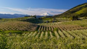 Time lapse of clouds and sky over Mt. Adams and pear orchards in Hood River OR 4k uhd stock video