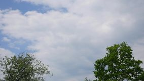 Time lapse of clouds in the sky with a tree stock video footage
