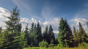 Time Lapse Clouds sweep over shoreline tall pines stock video