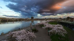Time lapse of clouds and traffic in Portland Or with Sakura cherry trees spring. Time lapse movie of dark moving stormy clouds and blue sky with foot and auto stock video