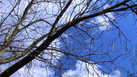 Time Lapse - Clouds Through The Trees. Time Lapse Through The Tree Branches stock video footage