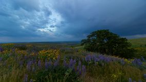 Time lapse of clouds yellow balsamroot and purple lupine wildflowers in Washington State 4k uhd stock video