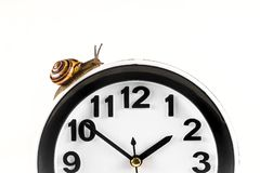 Time lapse concept - snail and clock isolated on white. Time lapse concept - snail and clock on white background royalty free stock photo