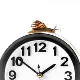 Time lapse concept - snail and clock isolated on white. Time lapse concept - snail and clock on white background stock photo