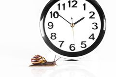 Time lapse concept - snail and clock isolated on white. Time lapse concept - snail and clock on white background royalty free stock image