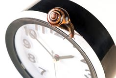 Time lapse concept - snail and clock isolated on white. Time lapse concept - snail and clock on white background royalty free stock photos