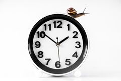 Time lapse concept - snail and clock isolated on white. Time lapse concept - snail and clock on white background royalty free stock images