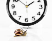 Time lapse concept - snail and clock isolated on white. Time lapse concept - snail and clock on white background stock photos