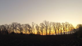 Time-lapse. The dawn through the trees in the spring stock footage