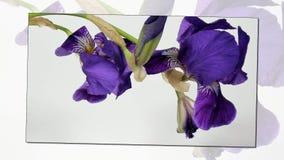 Time lapse de la floración de las flores metrajes