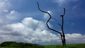 Time lapse de un árbol del metal en un campo metrajes