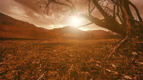 Time lapse of death tree and dry yellow grass at mountian landscape with clouds and sun rays. Horizontal slider movement