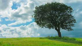 Time lapse del árbol verde que crece solamente en el campo, nubes que vuelan en cielo azul metrajes
