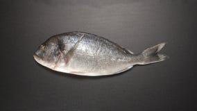 TIME LAPSE: Descongele los pescados de Dorade (la visión superior) almacen de video
