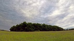Time lapse footage with clouds over the trees.  stock footage