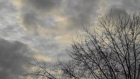 Time-lapse footage of dark clouds moving across the sky. And bare trees - on a cold winter day stock footage