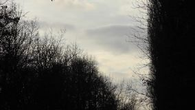 Time-lapse footage of dark clouds moving across the sky. And bare trees - on a cold winter day stock video
